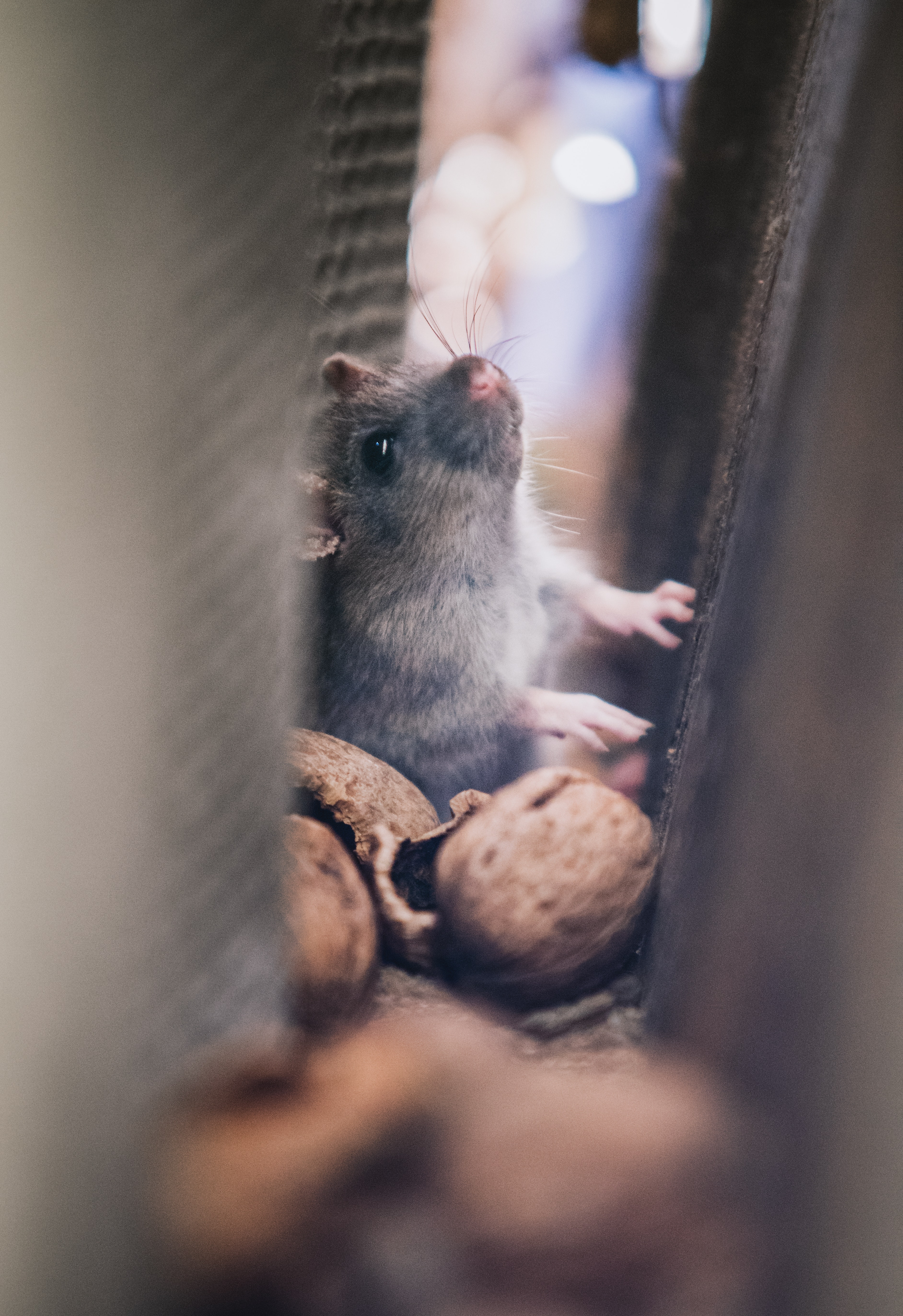 Rodents Nesting In Your HVAC Unit? Here's What To Do - B M C  / Clower